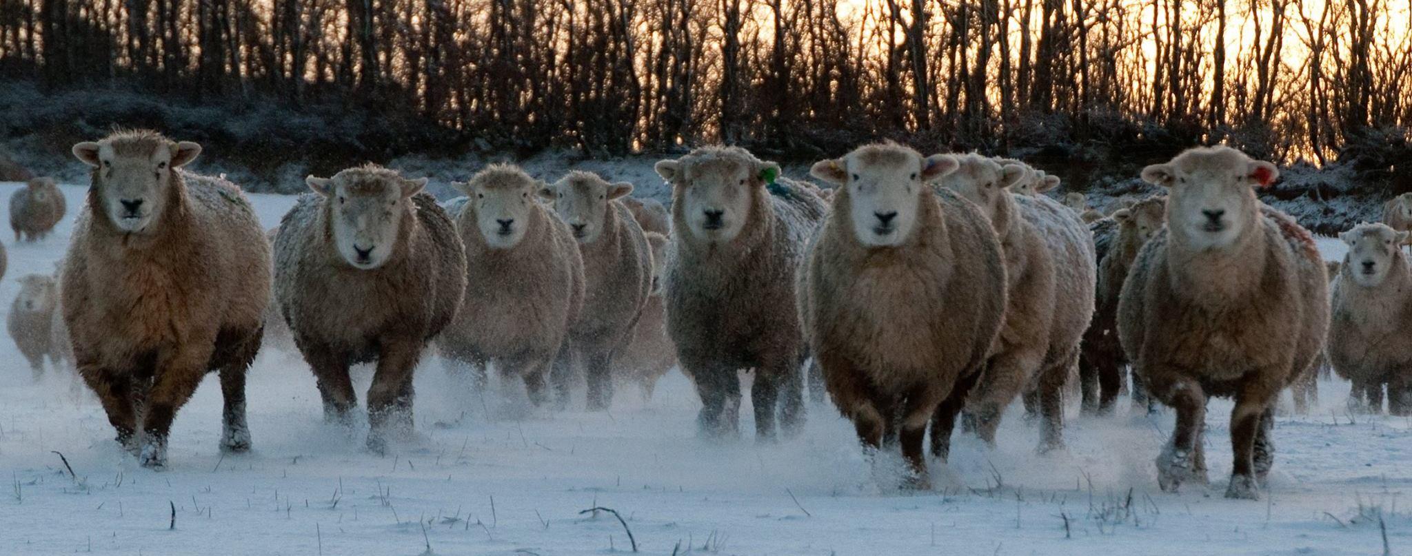 Exmoor in Winter
